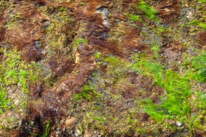 Moss on Jetty