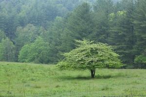 Solo Tree Start
