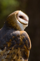 Mask texture Owl