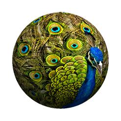 Peacock2-Edit