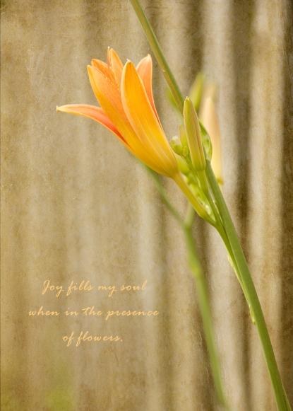 daylily-joy