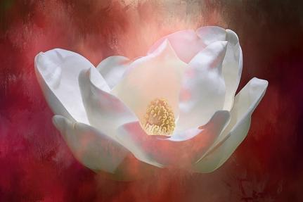 magnolia-on-fire