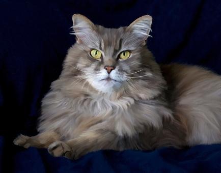jasper-longhair